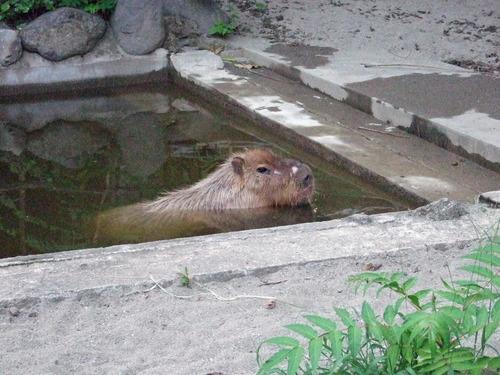 2010_081631 上野動物園0054_edited-1.JPG